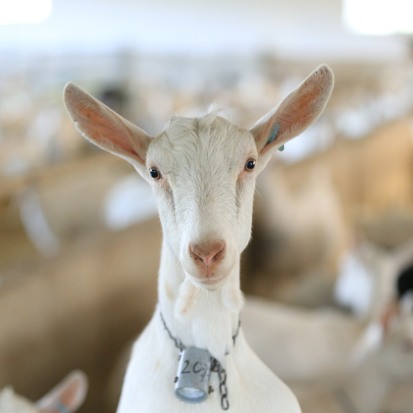 Animal Welfare Housing