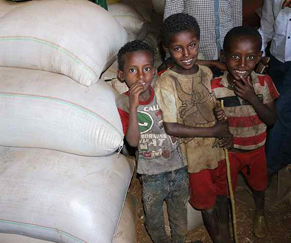 Photo for - Foundation supports food security in Ethiopia