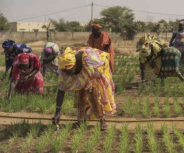 Photo for - Supporting female farmers in Senegal